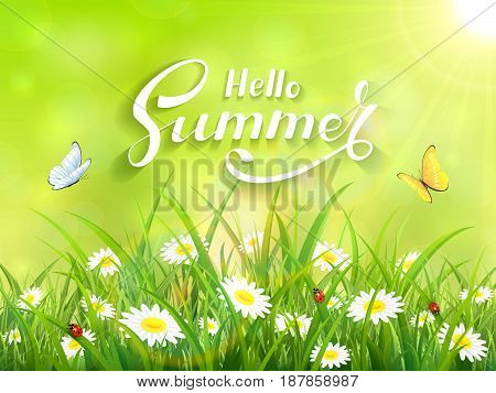 Sunny green background with lettering Hello Summer. Butterflies flying above the grass and flowers, illustration.