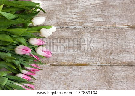 Row of pink tulips. Spring gift background. Flower bouquet on wooden backdrop with copyspace. Wedding, gift, birthday, 8 march, mother's day greeting card concept