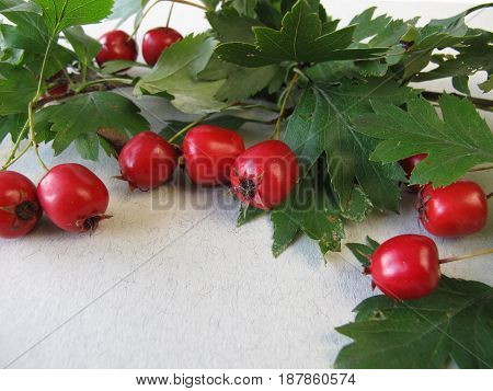 Hawthorn twigs with red fruits and leaves
