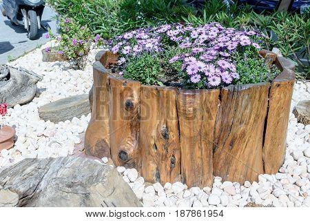 Beautiful lilac flowers grow on the stump.