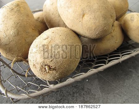 Potatoes from the field in wire basket