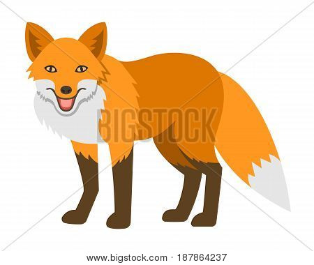 Cute smiling red fox vector cartoon illustration. Wild zoo animal icon. Shaggy adult predator standing. Isolated on white. Forest fauna childish character. Simple flat design element. Side view