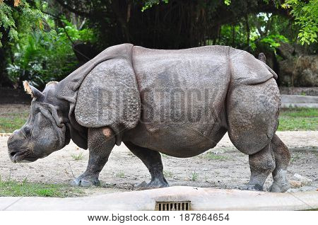 Rhino animal in the zoo color image side view