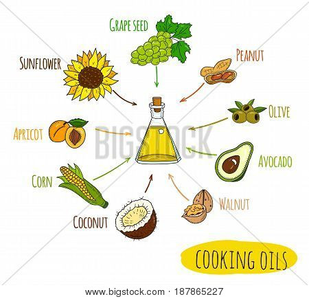 Hand drawn infographic of cooking oil sorts. Different kinds of edible vegetable food oils. With origin products olive, apricot, corn, grape seed, walnut, coconut, avocado, peanut and sunflower.