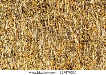 Straw texture close up of straw background golden background