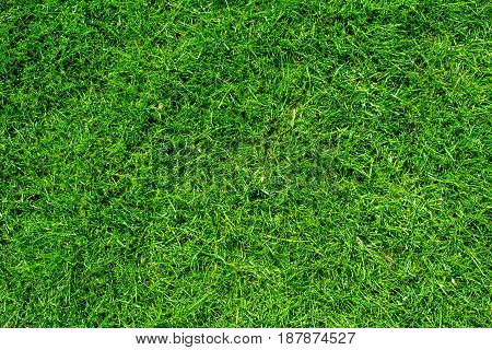 Natural green grass texture top view of the lawn golf green background