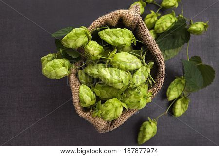 Green hops in burlap bag on dark concrete background from above.
