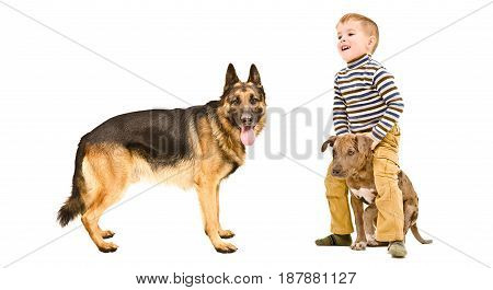 Cheerful child playing with a two dogs, isolated on white background