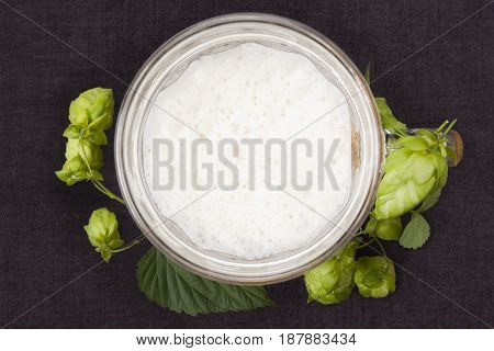 Hops around beer glass on dark concrete background from above.