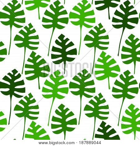 Monstera plant green leaves on white seamless pattern, vector background