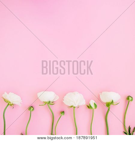 Frame of white ranunculus flowers and buds pink background. Flat lay, top view. Floral background.