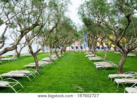 A relaxing place with sun beds under olive trees by seaside on southern Europe