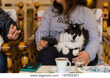 Black and white cat resting on a young girl's lap in a cafe. Girl sitting and chatting with her friend drinking Turkish coffee in a cafe.