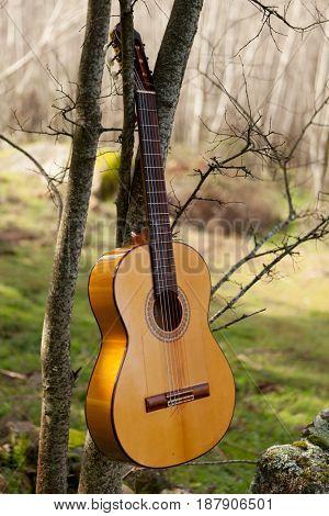 Classical guitar hanging of a tree in the forest