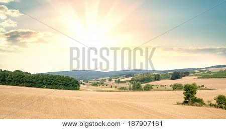 Panorama of fields with cultivated plants against the background of sunrise or sunset. Background for food advertising, plots of land or an ecological concept.