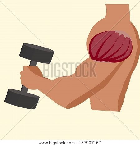 Antagonistic muscle biceps vector illustration gym time