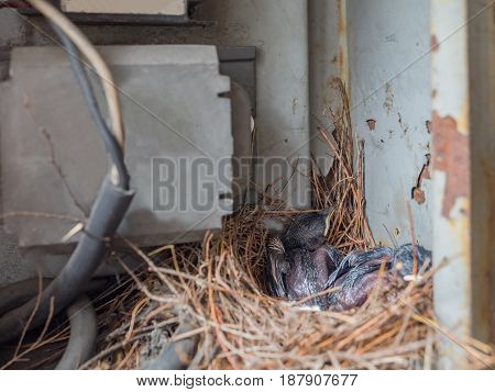 closeup of Baby Pigeon Nest in load panel box
