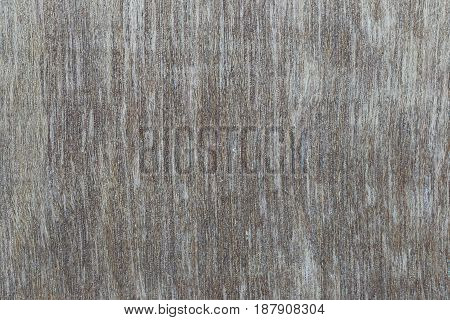 Old wood texture for the design nature surface background.