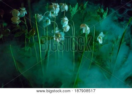 fog at moonlight with white blossom flowers in the night