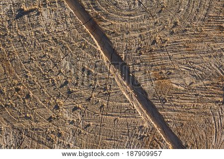Surface of the old knotted stump. Backgrounds and textures