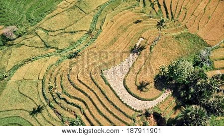 Aerial view of rice terraces in harvest season. Bohol, Philippines, April 2017.