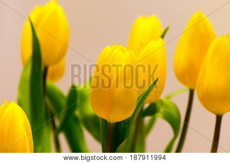 A tulip bouquet with many flowers as an Easter decoration