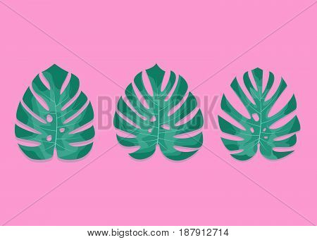 Exotic palm leaves. Monstera leaves on millenial pink background. Three different monstera leaves.