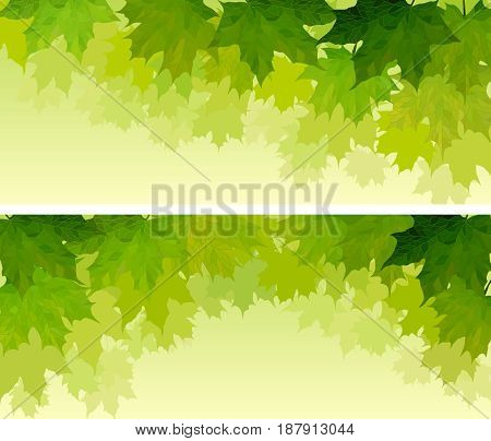 Set of horizontal wide banners maple tree crown with green leaves.