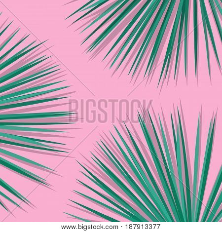 Tropical palm leaves. Botanical leaves on millenial pink background. Exotic background.