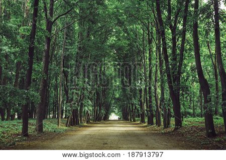 Trail or path in a beautiful park with tall trees