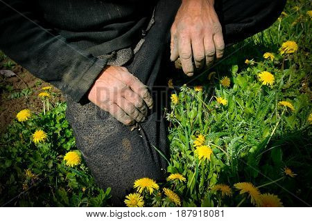 Countryside, spring. Two hands of a peasant on vacation. European. Ukraine, Cherkasy region. Colors are black, pink, red, yellow, green.