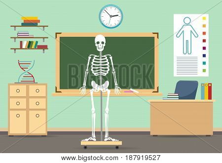 Anatomy classroom interior vector illustration. Empty class room with human skeleton for biology school literature lesson
