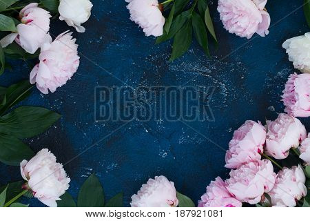 Fresh peony flowers frame with copy space on dark blue background