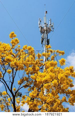 Contrast between nature and technology, a communication tower next to a beautiful tree in full bloom