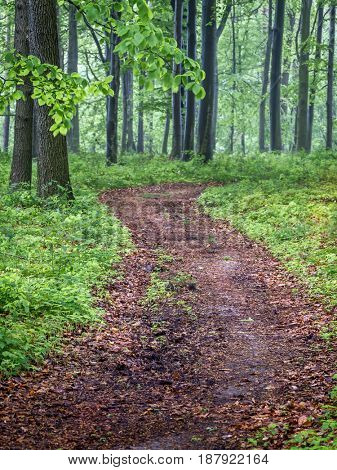 Path in the forest in spring time