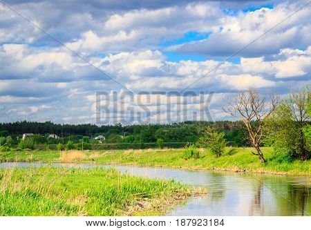 The river bank is brightly lit by the sun around the beautiful nature trees green grass a huge blue sky with clouds and coniferous forest on the horizon