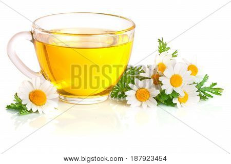 Herbal tea with fresh chamomile flowers isolated on white background.