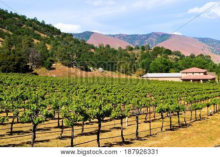 Vineyard with grapevines surrounded by mountains taken at wine country in Tehachapi, CA
