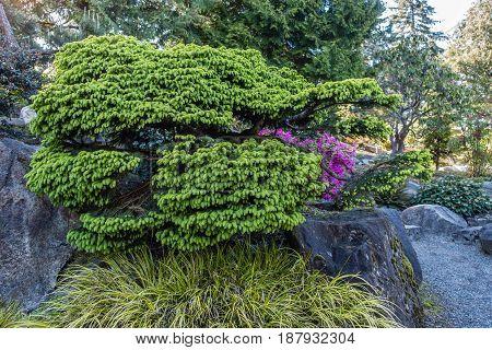 A view of a green shrub in Seatac Washington.