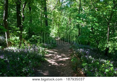 Sunny day in the spring forest. Landscapes