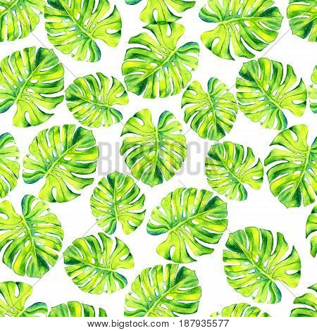 A leaf of a tropical plant. Monstera, philodendron - ampel plant, liana. Watercolor illustration. Texture for scrapbooking, wrapping paper, textiles, web page, wallpapers, surface design fashion