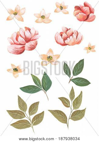 Watercolor flowers executed in a modern style to be used in design