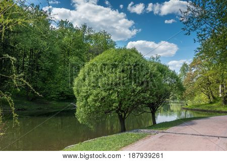 Trees near a pond in the park Tsaritsyno Park, Moscow, Russia