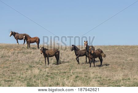 A small herd of horses grazes in the steppe