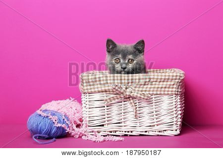 Grey Kitten In Basket With Balls On Pink Background
