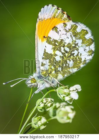 a coulered butterfly stands on a flower