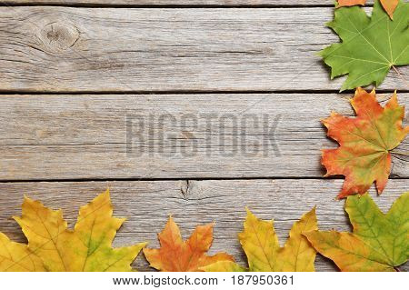 Autumn leafs on the grey wooden table