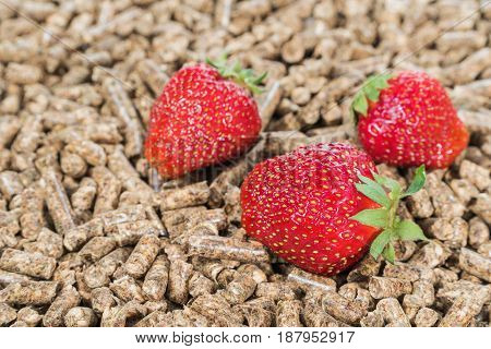 Three ripe strawberries on a pile of pressed pallets, close-up