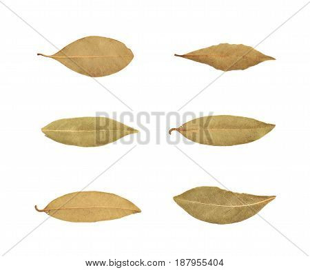 Single dried bay leaf isolated over the white background, set of six different foreshortenings