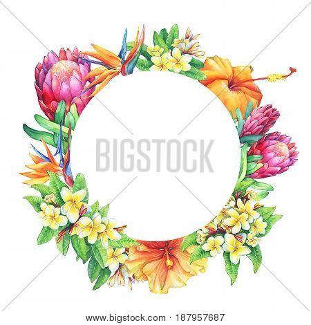 Round frame with branches purple protea, plumeria, strelitzia and hibiscus tropical flowers. Hand drawn watercolor painting on white background.